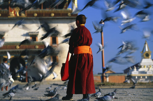 Rear view of Buddhist monk wearing red robe standing in a town square, feeding pigeons. - MINF08724