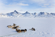 Winter landscape with pack of Huskies resting on the ice. - MINF08892