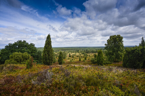 Germany, Lueneburger Heide in summer - FDF00235
