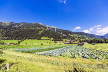 Austria, Salzburg State, Bad Hofgastein, vegetable fields - THAF02258