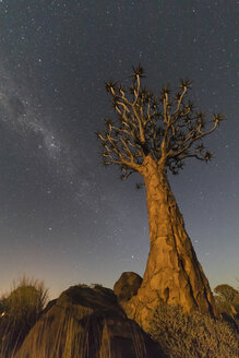 Africa, Namibia, Keetmanshoop, Quiver Tree Forest at night, milky way - FOF10164