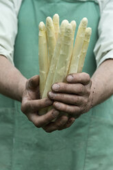 Man holding bundle of organic green asparagus in hands - ASF06206