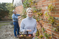Portrait smiling, confident mature woman harvesting apples in garden - HOXF03728