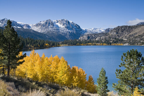 Yellow fall aspen trees with snowy mountians and June Lake in the Sierra mountains of California - AURF01540