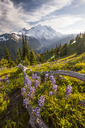 Wildflowers in Mount Ranier National Park - AURF01707