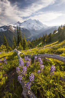 Wildflowers in Mount Ranier National Park - AURF01707