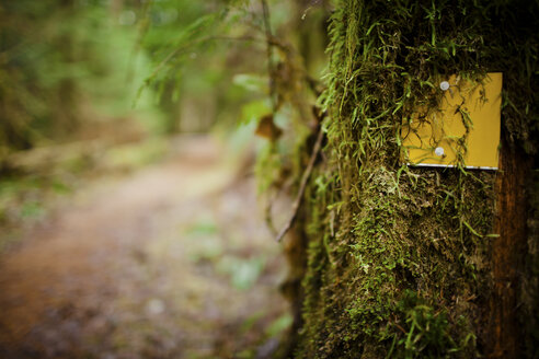 Trail markers - AURF01788
