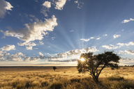 Africa, Botswana, Kgalagadi Transfrontier Park, Mabuasehube Game Reserve, Mabuasehube Pan at sunrise - FOF10205