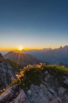 Germany, Bavaria, Allgaeu, Allgaeu Alps, Alpine pasque flower at sunrise - WGF01232