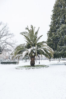Italy, Florence, snow-covered palm - MGIF00204