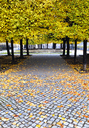 Germany, Saxony, Dresden, Bruehl's Terrace, way in park in autumn - WWF04249