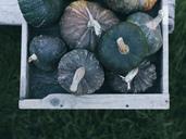Green pumpkins in wooden box - RAMAF00068