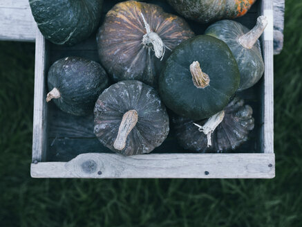 Green pumpkins in wooden box - RAMAF00068