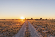 Botswana, Kalahari, Central Kalahari Game Reserve, piste at sunrise - FOF10229