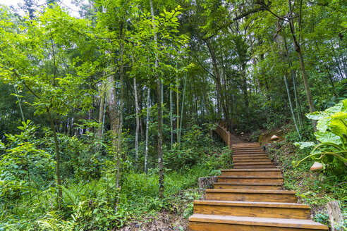 China, Fujian Province, stairs in Niumu forest - KKAF01481