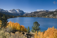 Yellow fall aspen trees with snowy mountians and June Lake in the Sierra mountains of California - AURF02860