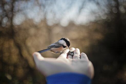 Bird perched on hand. - AURF03022