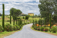 Italy, Tuscany, Monsummano Terme, country road - JUNF01185