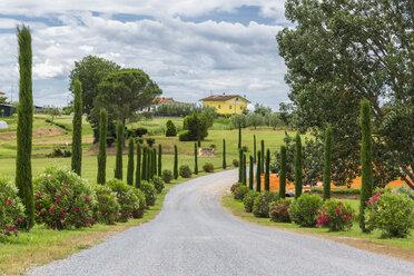 Italy, Tuscany, Monsummano Terme, country road - JUNF01185