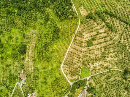 Italy, Tuscany, Aerial view of Monsummano Terme - JUNF01197