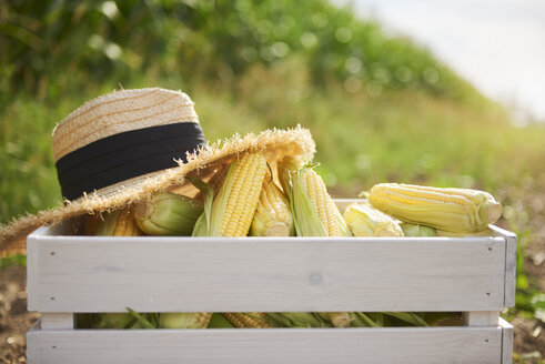 Corn cobs and straw hat in wooden crate on the field - ABIF00955