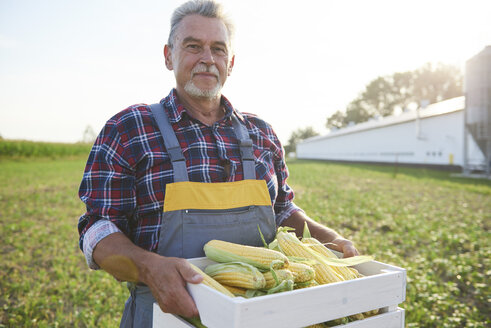 Farmer holding a full crate of corn cobs on the field - ABIF00961