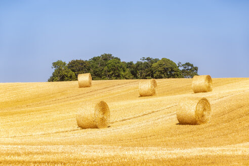 United KIngdom, East Lothian, field with straw bales - SMAF01160
