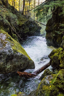 Stream flowing between rocks in forest, Whistler, British Columbia, Canada - AURF03876