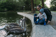 Baby girl and father feeding swans in a park in autumn - GEMF02406