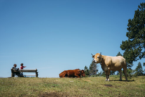 France, Osseja, father and little girl resting on a bench in the mountains  watching cows - GEMF02415