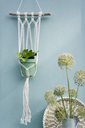 Do it yourself, Makramee attachment, ivy, braided tray, leek blossom - GISF00381