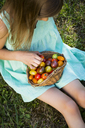 Little girl with basket of Heirloom tomatoes sitting on meadow in the garden - LVF07424