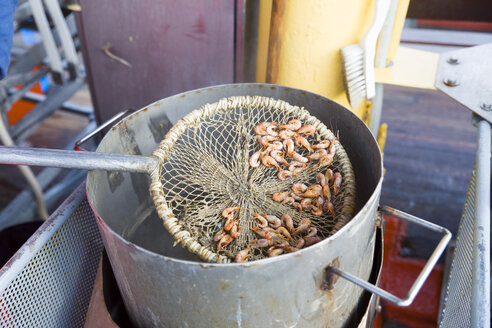 Boiled crabs in net, cooking pot - KLRF00697