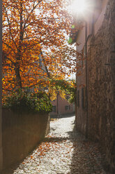 Germany, Rhineland-Palatinate, Freinsheim, city wall and empty alley in autumn - GWF05643