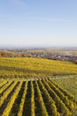Germany, Rhineland-Palatinate, Kallstadt, vineyards in autumn colours, German Wine Route - GWF05652