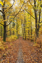 Germany, Rhineland-Palatinate, Palatinate Forest Nature Park in autumn - GWF05661