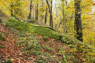 Germany, Rhineland-Palatinate, Palatinate Forest Nature Park in autumn, mossy rock - GWF05664