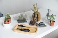 Variation of succulent plants and gardening equipment at home - AFVF01532
