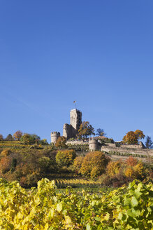 Germany,Rhineland-Palatinate, Pfalz, Wachenheim, Castle, autumn colours, German Wine Route - GWF05667