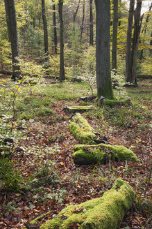 Germany,Rhineland-Palatinate, Pfalz, Palatinate Forest Nature Park in autumn - GWF05679