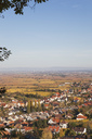 Germany,Rhineland-Palatinate, Pfalz, German Wine Route, wine village Gimmeldingen and autumn vineyards, Rhine Valley in distance - GWF05685