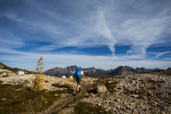 A young man hikes through the colorful larch trees in the Pasayten Wilderness on the Pacific Crest Trail (PCT) in Washington. - AURF04265