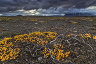 Autumn foliage and a stormy sky in the Icelandic Highlands - AURF04289