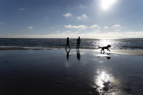 Young couple walking with their dog on the beach - HHLMF00433