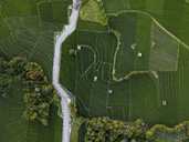 Indonesia, Bali, Aerial view of rice fields - KNTF01521
