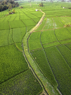 Indonesia, Bali, Aerial view of rice fields - KNTF01524