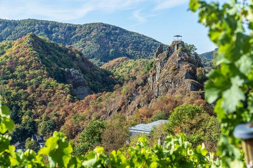 Germany, Rhineland-Palatinate, Altenahr, Ahr Valley, Are Castle, grape vine in autumn - FRF00726