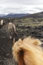 Iceland, Highlands of Iceland, Landmannalaugar, horseback riding. Icelandic horses, Fjallabak Nature Reserve - MMAF00549