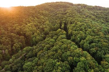 Austria, Lower Austria, Vienna Woods, Biosphere Reserve Vienna Woods, Aerial view of forest at sunrise - HMEF00009