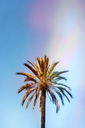 Low angle view of palm tree growing against blue sky during sunny day - CAVF48780